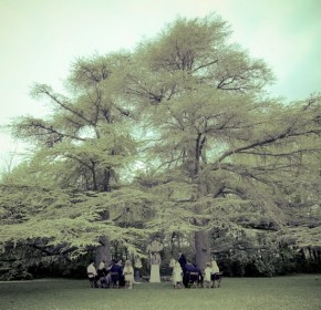 Lustres arbres 01